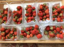 No pesticides, no air miles! Just tubs of sweet red deliciousness. Our first crop of the season. All sold out at Waffle this week.  Look out for them at our usual venues as the crop ripens for harvest